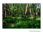 Пойменный лес в овраге Жилой Банный